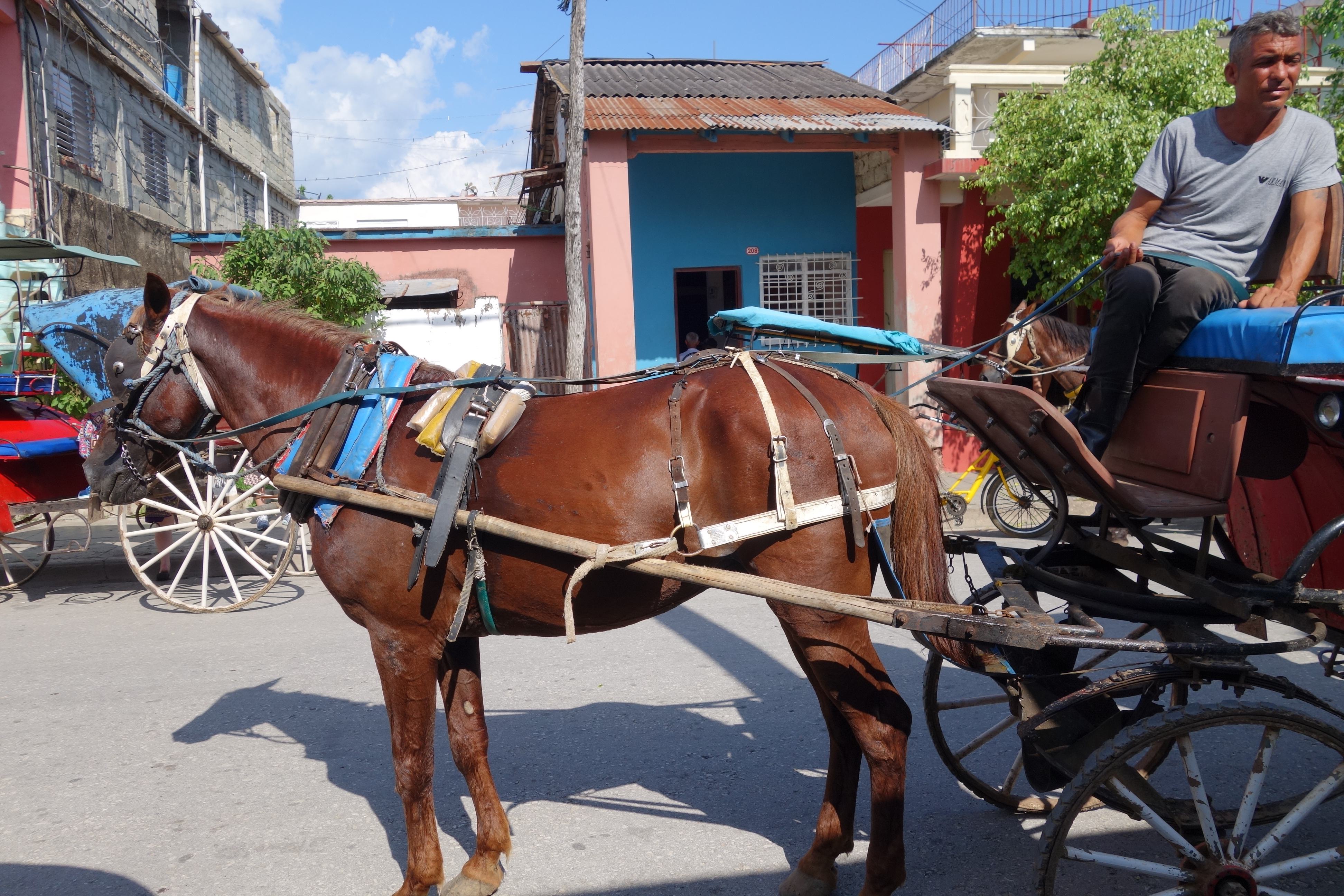 05.22 Horse and Buggie (3)