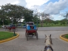 05.27 Horse and Buggy (7)