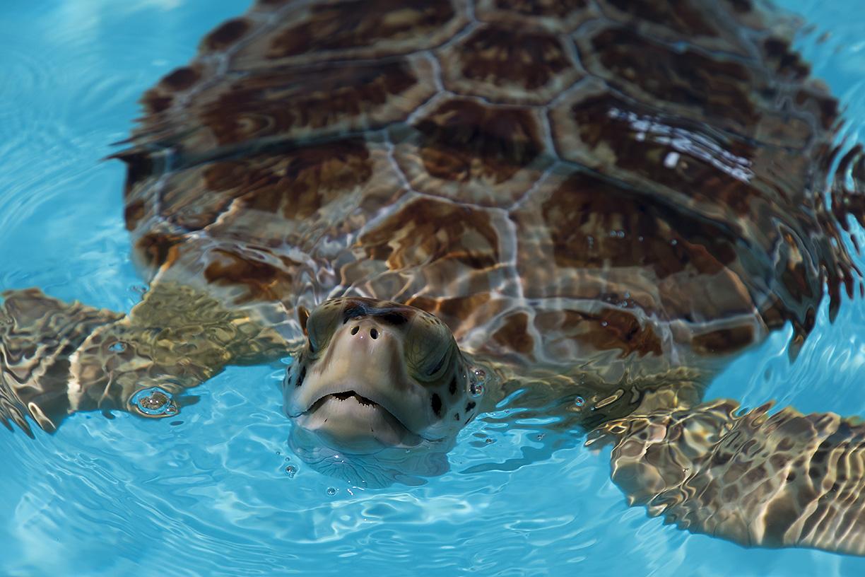 06302017 Turtle Hospital (13)