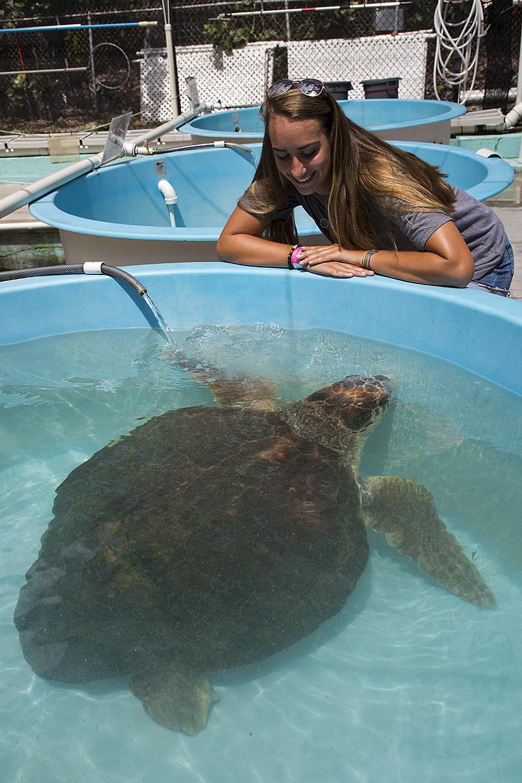 06302017 Turtle Hospital (2)