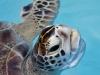 06302017 Turtle Hospital (7)